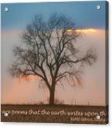 Tree - Sunset - Quotation Acrylic Print