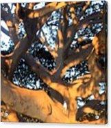 Tree Tangle 0551 Acrylic Print