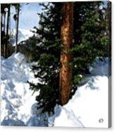 Tree Texture Acrylic Print