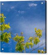 Tree To Sky II Acrylic Print