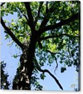 Tree Top Acrylic Print