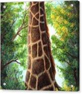 Tree Top Browser Acrylic Print