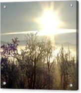 Tree Top Sunset 4 Acrylic Print