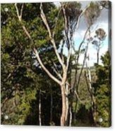 Tree Tops And Beyond Acrylic Print