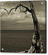 Tree Trunk-1-st Lucia Acrylic Print