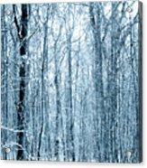 Tree Trunks Pattern Acrylic Print