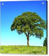 Tree Two One... Acrylic Print