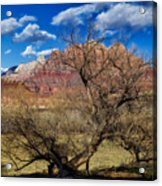 Tree With A View Acrylic Print