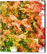 Tree With Autumn Leaves Acrylic Print