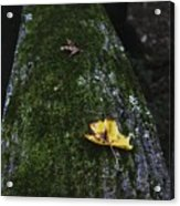 Tree With Yellow Leaf Acrylic Print
