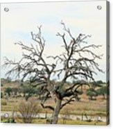 Tree009 Acrylic Print