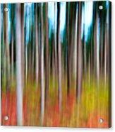 Treecolour Acrylic Print