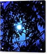 Treed Moon Acrylic Print