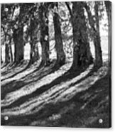 Treeline Acrylic Print