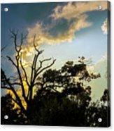 Treeline Silhouette Acrylic Print