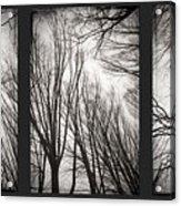 Treeology Acrylic Print