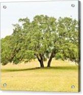 Trees 004 Acrylic Print