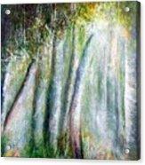Trees 1 Acrylic Print