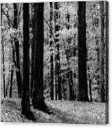 Trees #2 Acrylic Print