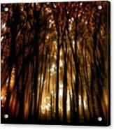 Trees 2 Acrylic Print by Tony Wood