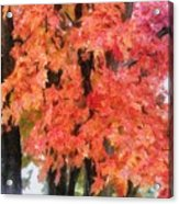 Trees Aflame Acrylic Print