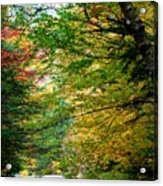 Trees Along The Flumes Trail Acrylic Print