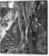 Trees And Brick Crosses Acrylic Print