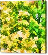 Trees And Leaves 1 Acrylic Print