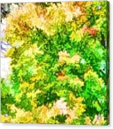 Trees And Leaves  Acrylic Print