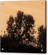 Trees And Geese In Sepia Tone Acrylic Print