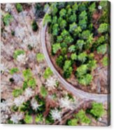 Trees And Path From Above Drone Photography Acrylic Print