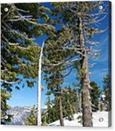 Trees And Snag At Crater Lake Acrylic Print