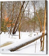 Trees And Snow Acrylic Print