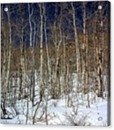 Trees And Something In The Snow Acrylic Print