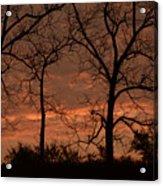 Trees And Sunrise Acrylic Print