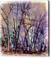 Trees Are Poems That The Earth Writes Upon The Sky Acrylic Print