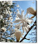 Trees Art Prints White Magnolia Flowers Baslee Troutman Acrylic Print