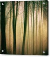 Trees At Dawn Acrylic Print