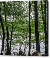 Trees At Lake Schlachtensee Acrylic Print