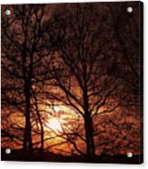 Trees At Sunset Acrylic Print
