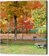 Trees Begins Autumn Color Acrylic Print