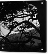 Trees Black And White - San Salvador Acrylic Print