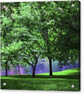 Trees By A Pond Acrylic Print