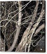 Trees Closeup Acrylic Print