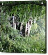 Trees Fallingwater  Acrylic Print