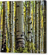 Trees For The Forest Acrylic Print