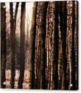 Trees Gathering Acrylic Print