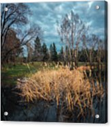 Trees In A Fog On A Background Of The River In Summer Morning  Acrylic Print
