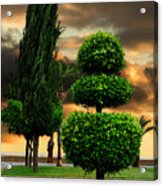 Trees In A Park Of Limassol City Sea Front In Cyprus Acrylic Print