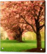 Trees In A Row Acrylic Print